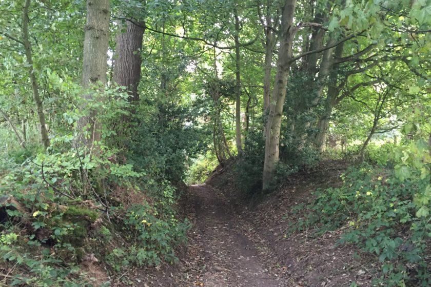 Bridleway to Reigate Hill