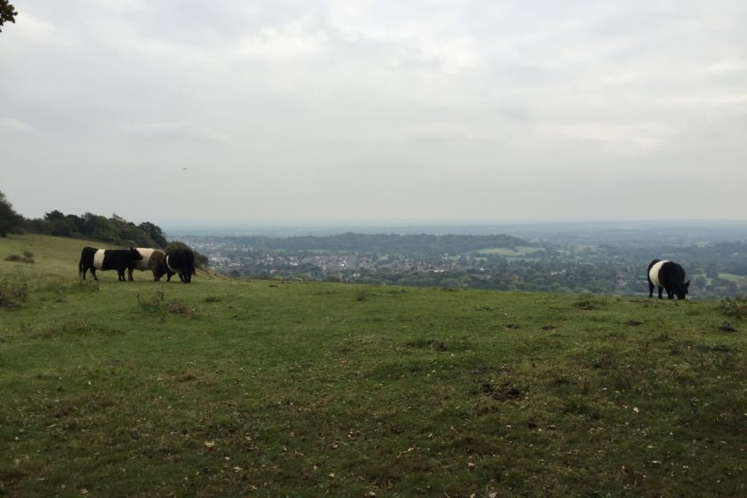 Reigate Hill