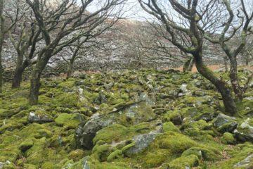 Mossy ground by Llyn Cwm Bychan