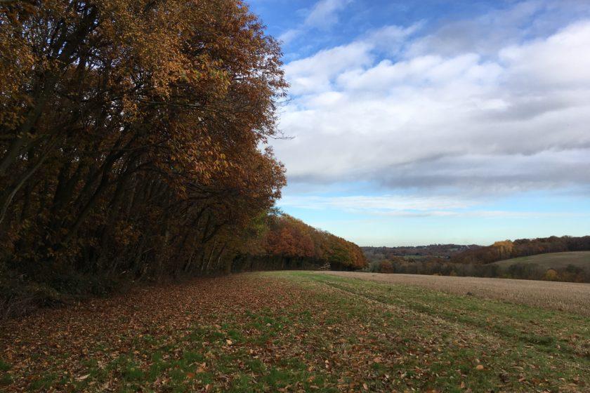 Autumn in Robertsbridge