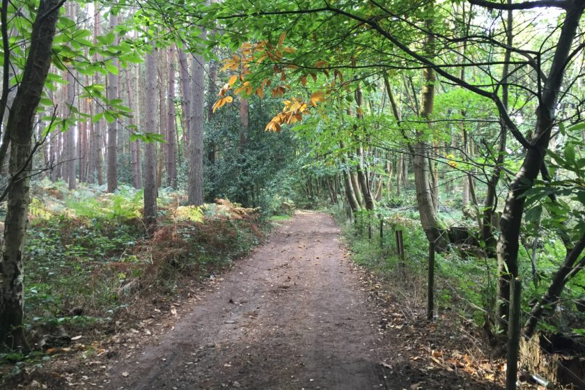 Bridleway to Headley