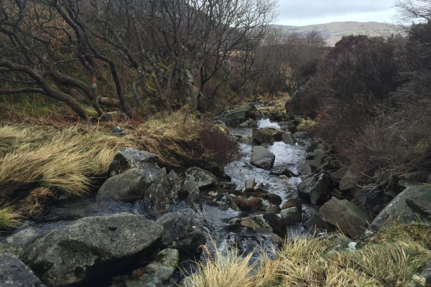 Stream to Llyn Cwm Bychan