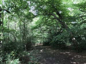 Trail in Epping Forest