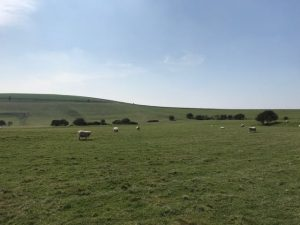 Countryside in Sussex