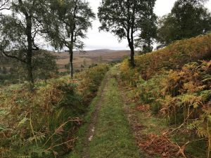 trail in Cairngorms