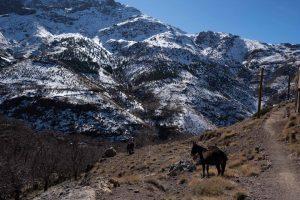 Moroccan mules