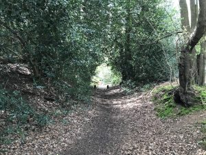 mountain biking near Guildford