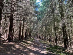 Glentress Forrest